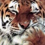 Рисунок профиля (Unagerunda)